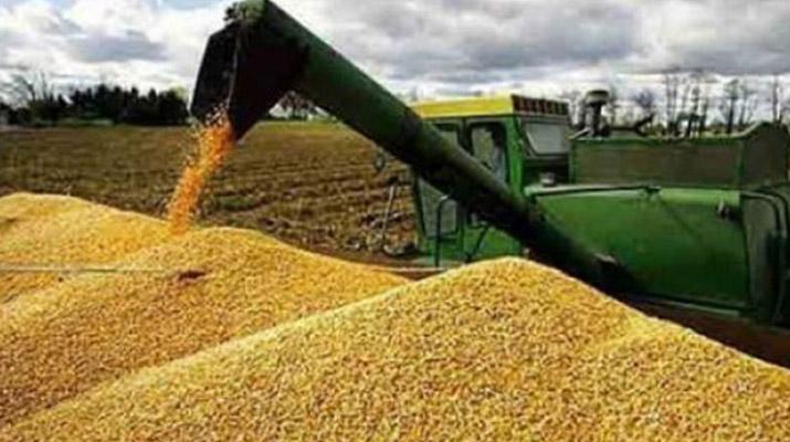 Un total de 60  toneladas de maíz  llegaron a Sucre