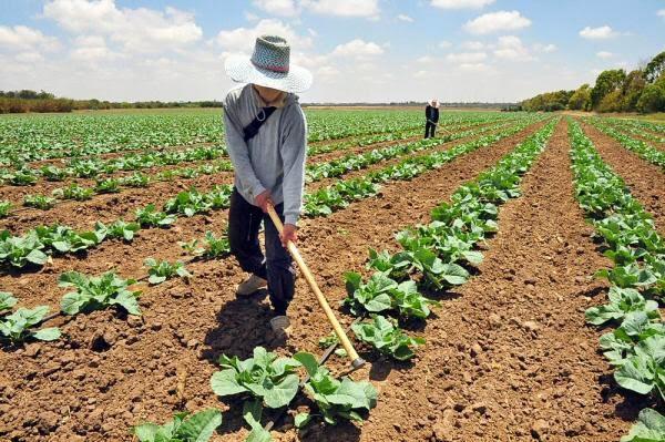 Fedeagro: Producción agrícola apenas cubrirá 30 % del consumo del primer trimestre