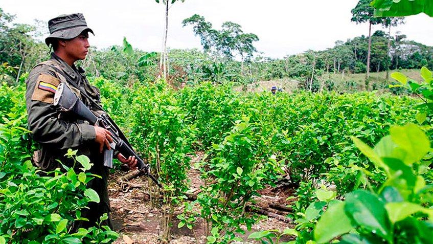 Acuerdo de paz con las Farc promovió el aumento de cultivos de coca