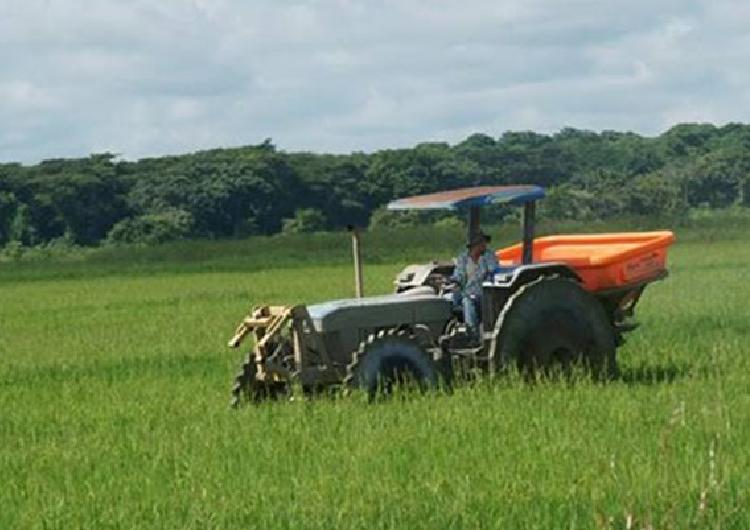 Plan de siembra cubre 2,9 millones de hectáreas
