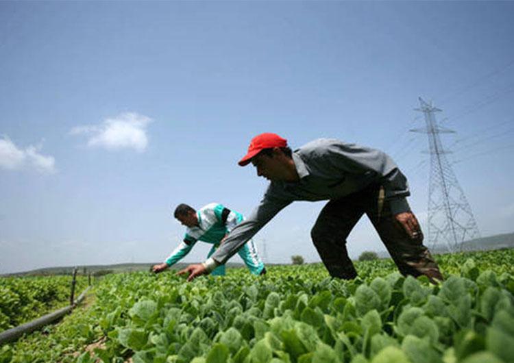 Plan de siembra activará alianzas en el país