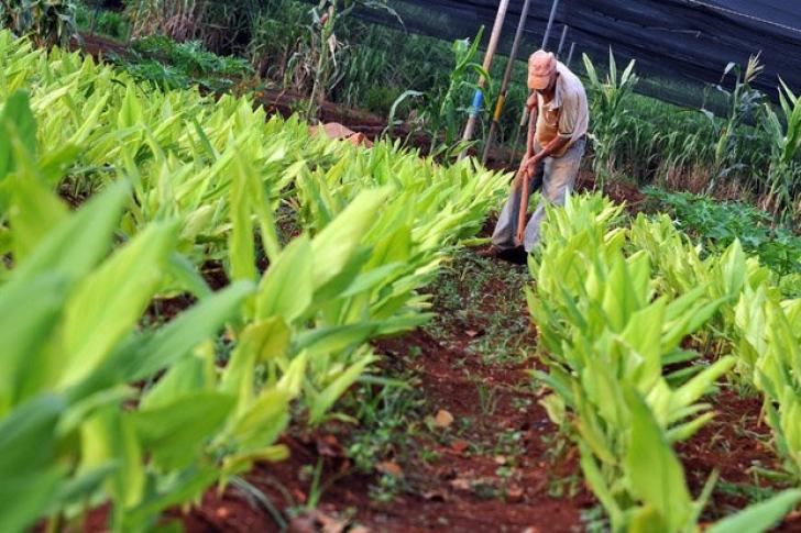 Fedeagro alertó sobre emergencia agroalimentaria en Venezuela