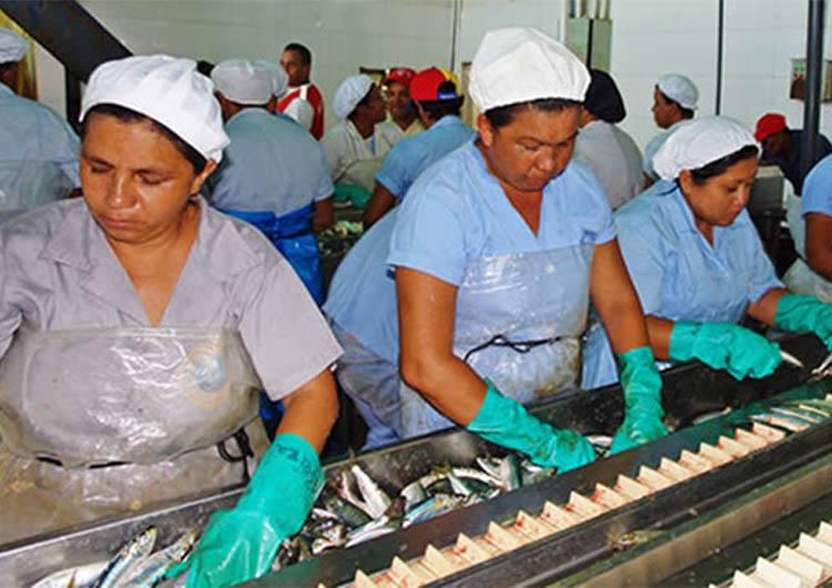Esperan incrementar producción de La Gaviota