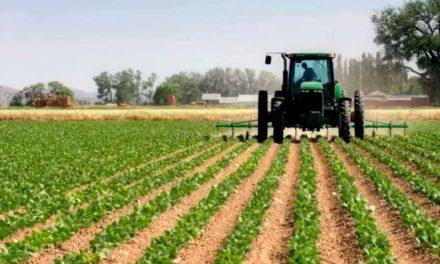 Fedeagro: Producción solo puede abastecer el 25% del consumo nacional