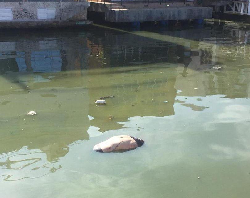 Hallaron cadáver flotando en canal de Casas Bote B