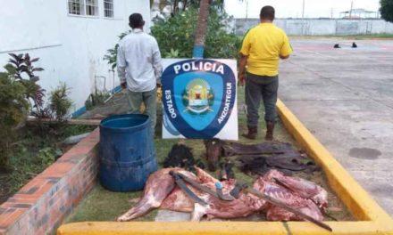 Arrestados dos sujetos por sacrificar un caballo en una finca de Pariaguán