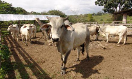 Fedenaga denuncia que niveles de producción en el país han disminuido