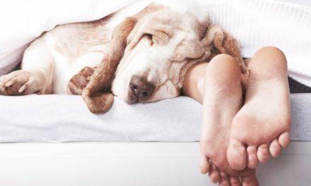 La razón por la cual no deberías dormir más con tu perro
