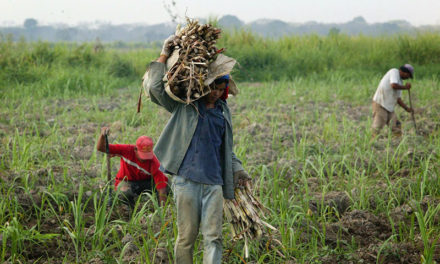 Fedeagro: Sector entró en un paro técnico