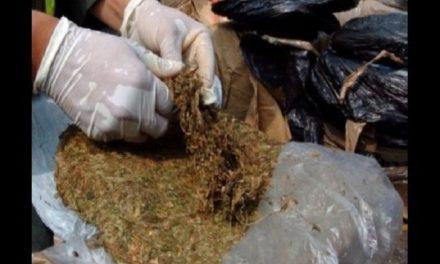 Autoridades colombianas decomisaron dos toneladas de marihuana