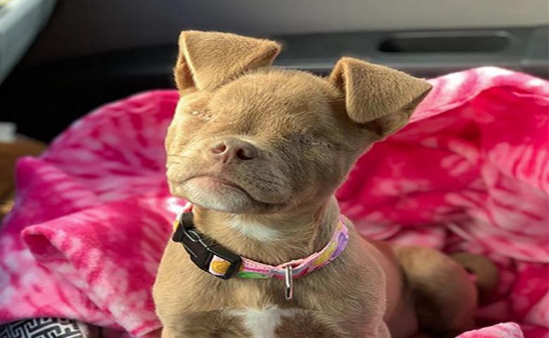 Un perro sin ojos se ha convertido en un escándalo es las redes sociales