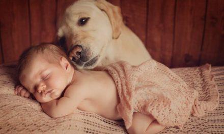 Perro salva a bebé recién nacido que fue enterrado vivo por su mamá adolescente
