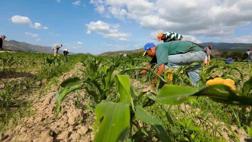 Gobierno aprobó más de 13 mil millones de bolívares para planes productivos del FFM