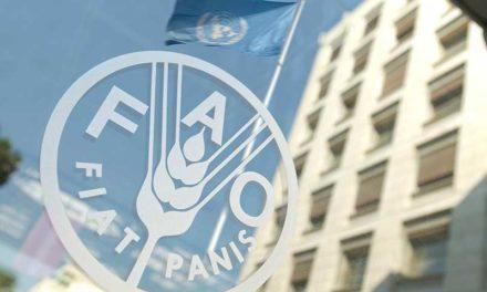 FAO: el mundo está lejos de cumplir metas de alimentación sostenible