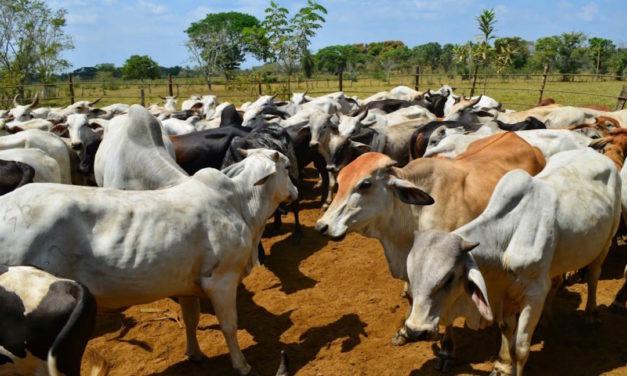 Fedenaga advirtió que solo producen 35% de las necesidades del país