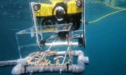 Empresa española desarrolla dron submarino para transportar crías de tiburón