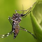 Al menos 591 personas han muerto por dengue en Brasil en lo que va de año